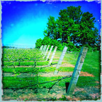 Stephanie Schaltter Art - On the Michigan Wine Trail