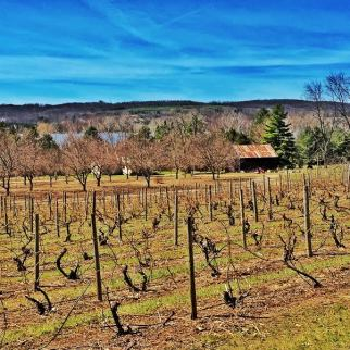 Spring on the Michigan Wine Trail