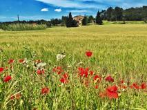 More poppies, flanking a villa